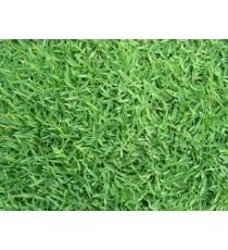 SEMI DI GRAMIGNONE PER PRATO CARPET GRASS KG. 1