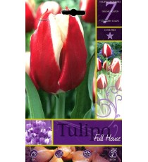 BULBI DI FIORE TULIPA FULL HOUSE N. 7
