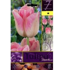 BULBI DI FIORE TULIPA SHOWBIZZ N. 7