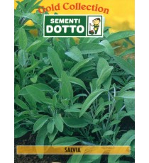 DOTTO BUSTE SEMI DI SALVIA OFFICINALE
