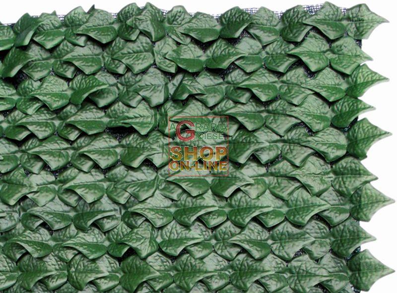 Arelle siepe sempreverde edera mt 1 5x3 for Arelle ombreggianti