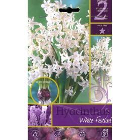 BULBI DI FIORE HYACINTHUS WHITE FESTIVAL N. 2