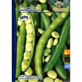 FAVA GR. 500 SUPERAGUADULCE ROYAL SEED