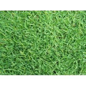 SEMI DI GRAMIGNONE PER PRATO CARPET GRASS KG.25