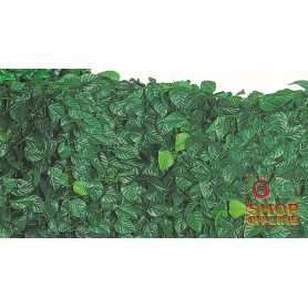 ARELLE HEDGE EVERGREEN LAUREL MT. 0.35 X 10