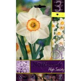 BULBI DI FIORE NARCISSUS HIGHT SOCIETY N. 3