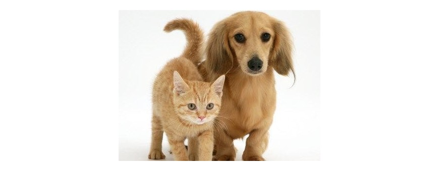 PET DOGS AND CATS