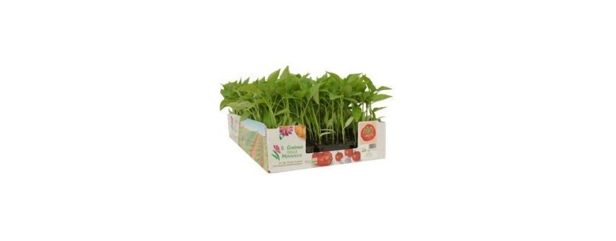 SEEDLINGS HORTICULTURAL